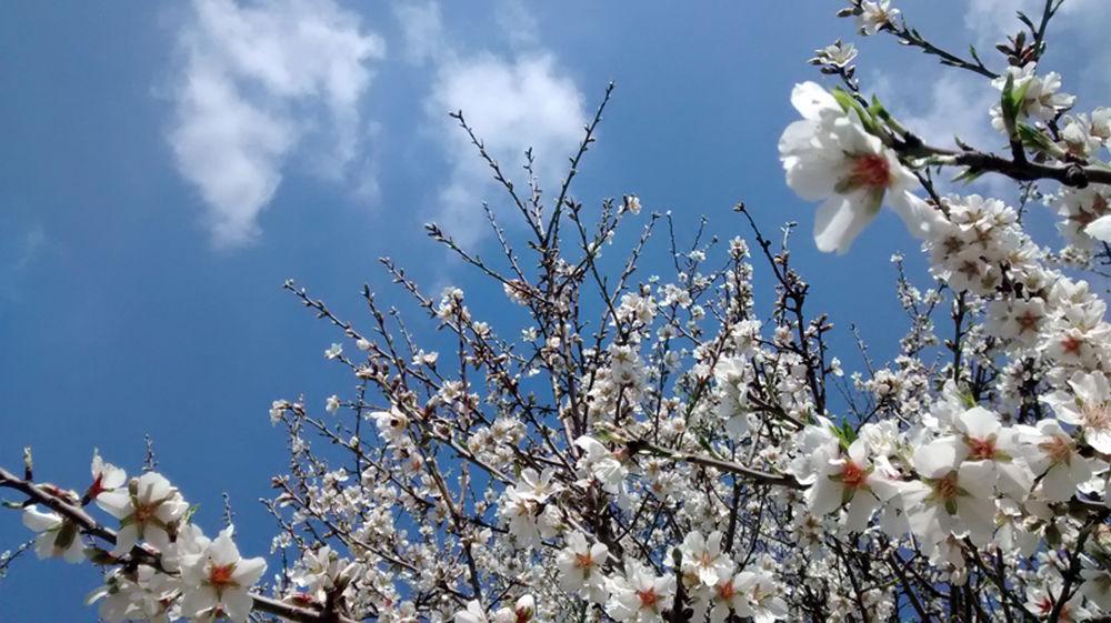 Ametller-florit-Parc-Torreblanca-MCASCANTE_1315678561_20936868_1000x561